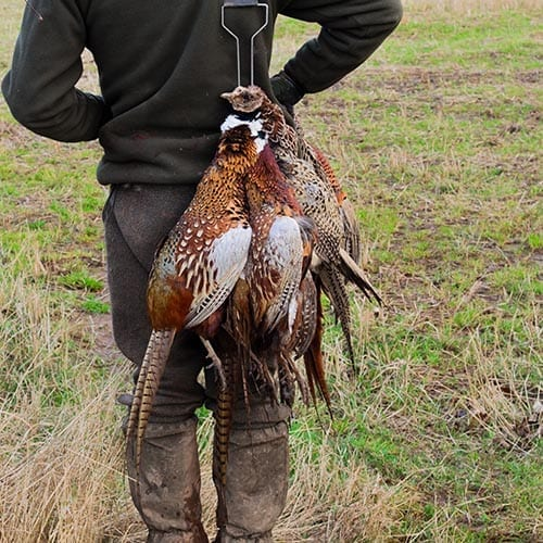 Hunter carrying some pheasants on his estate