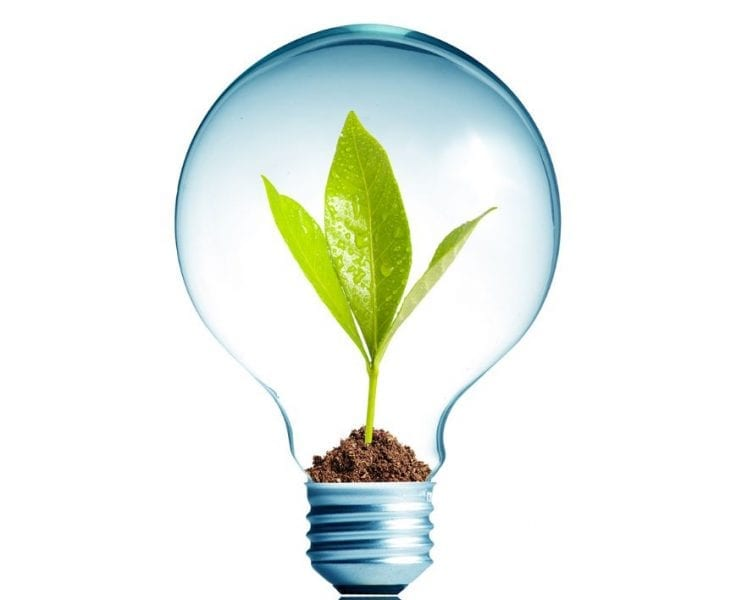 Lightbulb With Sprouting Plant Inside
